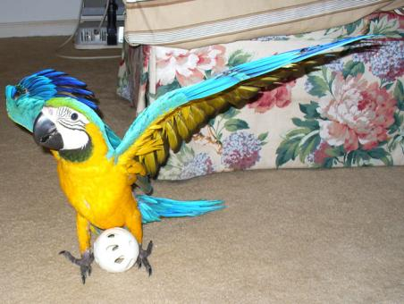 PARROTS AND PARROTS EGGS FOR  SALE (267) 368-7695