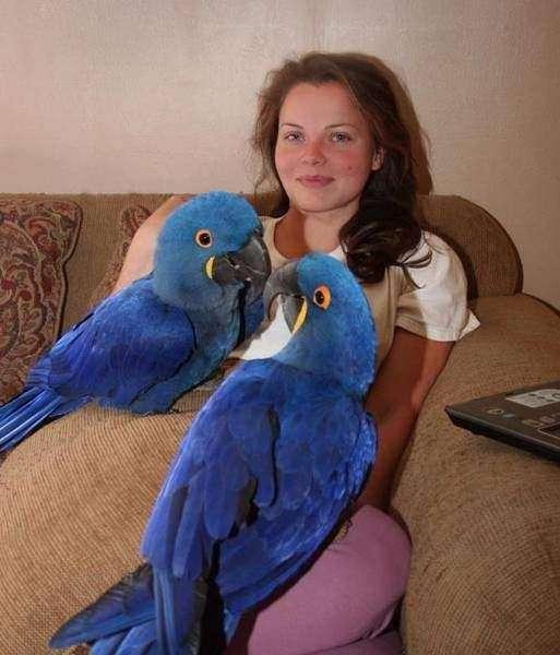 Birds - Parrots ,Toucans eggs Macaws parrot eggs African Congo Gr